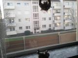2-Zi.-Eigentumswohnung im 1. OG mit Balkon !